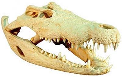 """Obrázek """"http://www.wildafrica.cz/images/animals/102_krokodyl-lebka.jpg"""" nelze zobrazit, protože obsahuje chyby."""