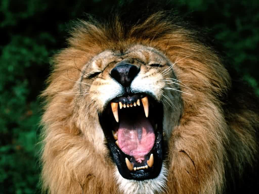 http://www.wildafrica.cz/images/animals/446_lev10.jpg