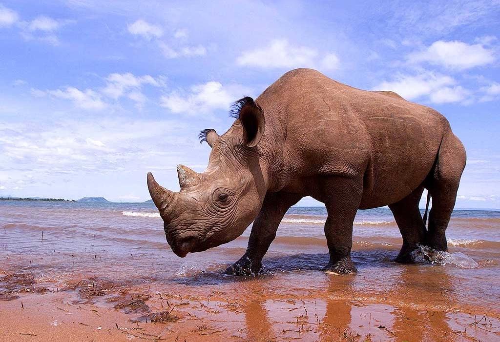 http://www.wildafrica.cz/images/animals/459_nosorozec-dvourohy-1blackrhino.jpg